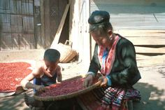 Blue Hmong woman and boy sorting red beans at a village along the road between Chiang Mai and Fang 8812n36