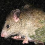 You searched for trapping - Predator Free NZ Rat Traps, Native Plants, Predator, Rats, Backyard, Animals, Image Search, Free, Patio