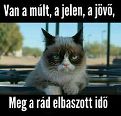 "Képtalálat a következőre: ""grumpy cat magyarul felirattal"" Funny Cats, Funny Animals, Cute Animals, It's Funny, Hilarious, Grumpy Cat Humor, Cat Memes, Grumpy Cats, Crazy Cat Lady"