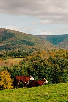 One of our top east coast travel destinations for this year is the Berkshires. Get our full guide here.