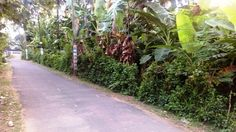 10 cent Residential Land at Karuvannur,