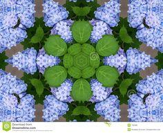 http://nl.dreamstime.com/stock-foto-de-caleidoscoop-van-hydrangea-hortensia-s-image720390