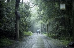 Rainy days - in Hangzhou #hangzhou #china #asia #travel #explore #rain #nature
