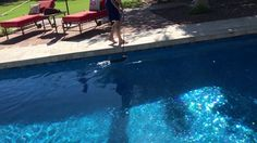 "Tempe dog training ""k9katelynn""teaches cocoo (Chihuahua mix) how to swim! K9katelynn.com - YouTube"