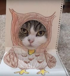 This adorable cat is not happy about this Halloween costume