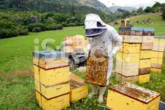 Commerial Beekeeper working on Beehives royalty-free stock photo