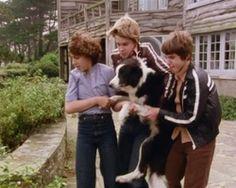screenshot: George, Julian und Dick tragen Timmy in Sichherheit The Famous Five, Enid Blyton, Nostalgia, Adventure, Plays, Musicals, Films, British, Tv
