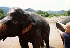 Hotspot Chiang Mai: Elephant Nature Park.  Absolute must visit!!!