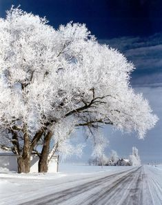 one of my favorite things about North Dakota...white winter trees! #gorgeous