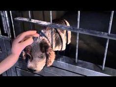Un cortometraje de animación que fomenta la adopción | senderismo con mi perro