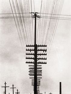 View Telegraph Wires Fili Ellectrici by Tina Modotti on artnet. Browse more artworks Tina Modotti from Throckmorton Fine Art, Inc. Tina Modotti, Louis Daguerre, Line Photography, History Of Photography, Edward Weston, Gordon Parks, Walker Evans, Black White Photos, Black And White