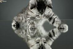 I'm a beautiful kitten😻 www.youtube.com/c/WeMeow #cat #cats #wemeow #meow #catlife #cutecat #catlove #gatos #gatti #koty #katze #chats #kitty #kitten #kittens #lovecat #funnycat #catofinstagram #catsoftumblr #catstagram #instapets #instacat #pet #pets #catlover #catnature