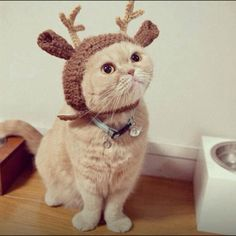 Haha. Thought of you. Chili would like this hat. It'd match his leash.