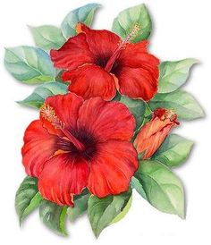 Imagenes flores rojas para imprimir