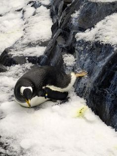 penguin- Disney antarctica exhibit