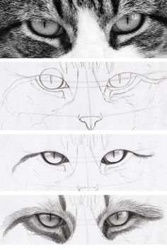 Draw Human Eyes dessin réaliste des yeux de chat dans les étapes - Cats have some of the most intriguing eyes around — which is why they're a fun drawing challenge. Learn how to draw cat eyes right meow on Craftsy! Drawing Techniques, Drawing Tips, Drawing Tutorials, Art Tutorials, Painting & Drawing, Drawing Ideas, Dog Drawing Tutorial, Drawing Reference, Drawing Drawing