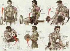 Blast biceps.