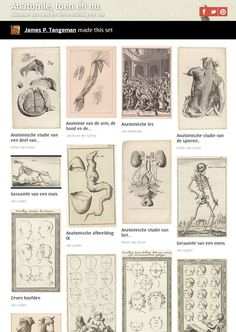Week 45: Rijksstudio collection Anatomy, byJames P. Tangeman