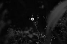 Dente di Leone | Flickr - Photo Sharing!