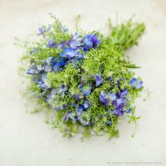 Zita Elze delphinium and greenbell bouquet, photo: Julian Winslow MD s Wedding Table Flowers, Flower Bouquet Wedding, Spring Bouquet, Spring Flowers, Cut Flowers, Blue Delphinium, Delphiniums, Trailing Bouquet, British Flowers