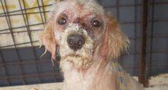 Entrará en vigor pena de cárcel para maltrato animal   UN1ÓN Jalisco   Jalisco