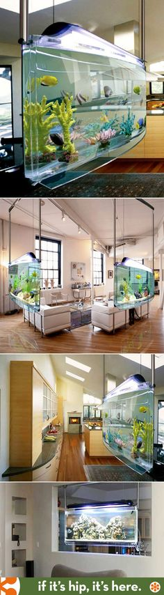 The Spacearium, a wonderful suspended fish tank / aquarium from Aquatic Perfection