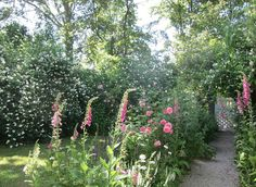 The path with English (Austin) roses   Flickr - Photo Sharing!