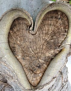 heart-shaped tree knot