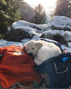 idk who took this photo, but I love you and your dog Cute Puppies, Cute Dogs, Dogs And Puppies, Doggies, Baby Animals, Cute Animals, Hai, Tier Fotos, Scottish Fold