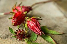 南国を代表する花としてのイメージが強いハイビスカスですが、ローゼルという種類がハーブに利用され、ジャムやゼリー、パイ、そしてカフェインを含まないハーブティーとして疲労回復、利尿、風邪やのどの痛みの緩和などに有効です。酸味が強いので蜂蜜や他のハーブとブレンドして使います。