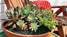 Mixed Succulents | Enjoy nonstop color all season long with these container gardening ideas and plant suggestions. You'll find beautiful pots to adorn porches and patios. You may not have the space or patience to become a master gardener, but anyone can master container gardening. It's a cinch—all you need is a container (a planter in true gardener speak), potting soil, some plants and you're ready to go. Thinking of container gardening like this, it's easy to see why container gardening…