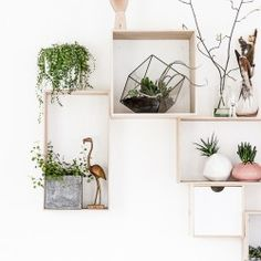February 2015: Hanging Planters | Urban Jungle Bloggers