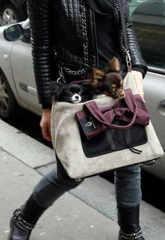 Street Style Pets