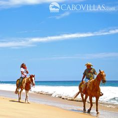 Horseback riding with the team of Rancho Carisuva is an excellent way to see the sights in Los Cabos #MEXICO - Tour info: http://www.cabovillas.com/tour_information.asp?PID=203  #travel #LosCabos #CaboSanLucas #Cabo #Mexico #vacation #beach #horsebackriding #horses #MexicoTravel #tourism #BajaCaliforniaSur #BajaSur #BCS