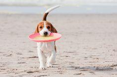 Perro con un frisbee en la boca