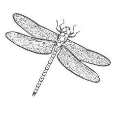dragon fly - Google Search