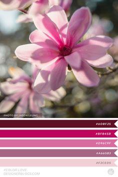 #colorlove #dblove Color Palette Color Pallets, Color Schemes, Things To Do, Palette, Rainbow, Crafty, Interior Design, Plants, Inspiration