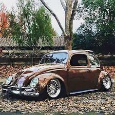 V-Dub   Beautiful Brown Bug