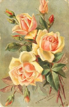 three orange-yellow roses facing up with seven buds around  A.GAMMIUS-BOECKER