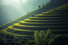 Vietnam Rice fields on terraced by SasinTipchai #travel #traveling #vacation #visiting #trip #holiday #tourism #tourist #photooftheday #amazing #picoftheday