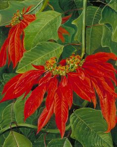 Flor de Pascua or Easter Flower, at Morro Velho, Brazil, c. 1873 - Marianne North (English, 1830-1890)