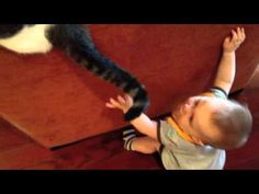 A determined baby tries to catch a cat's swift moving tail!