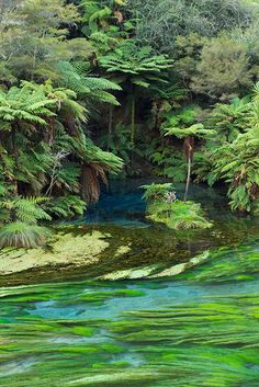 The Blue Spring (source of around 60% of New Zealand's bottled water), Waihou River, Putaruru, New Zealand