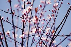 IMG_9848 by uncarnetsanspages, via Flickr