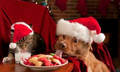 Pet-proof your Christmas