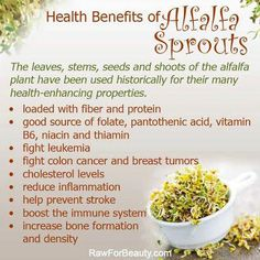 Natural Cures Not Medicine: Health benefits of alfalfa sprouts #Health