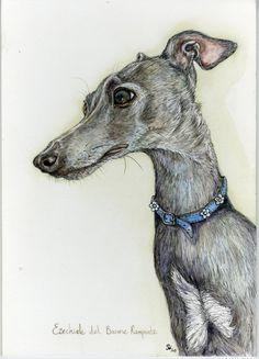 Italian Greyhound Head Study