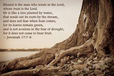 Tree roots extending to the water. Jeremiah 17:7-8