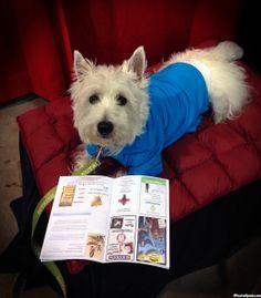 2014 Tampa Pet Expo @Diane Haan Lohmeyer Pet Expos  Coverage of the 2012-2014 Amazing Pet Expos from their Online Ambassador - Preston from PrestonSpeaks.com.  #dog #westie #westhighlandwhiteterrier #amazingpetexpo