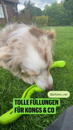 Funny Dogs, Cute Dogs, Dog Behavior, Dog Supplies, Dog Treats, Small Dogs, Corgi, Fur, Animals